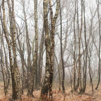 Silver Fog