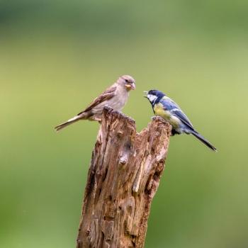 Small Birds Fighting
