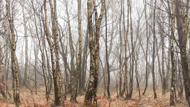 Ashdown Forest Fog - Nikon D750, ISO200