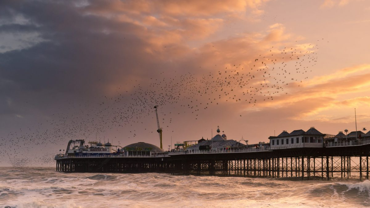 Brighton starling Murmuration Photography for sale